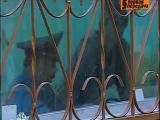 Первая передача. Выпуск 13 / 24.10.2010 (kotov-net.ru)